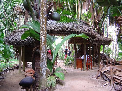 Vallée de mai aux Seychelles